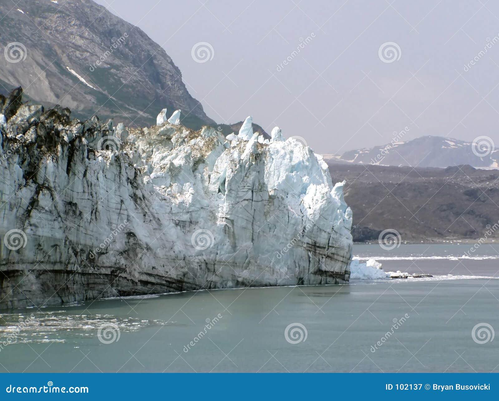 Geleira de Margerie - louro de geleira