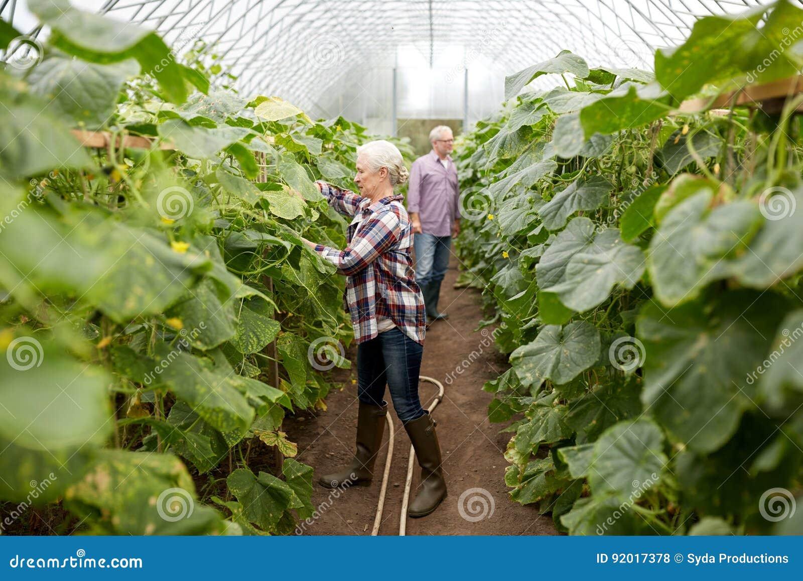 Gelukkig hoger paar die bij landbouwbedrijfserre werken