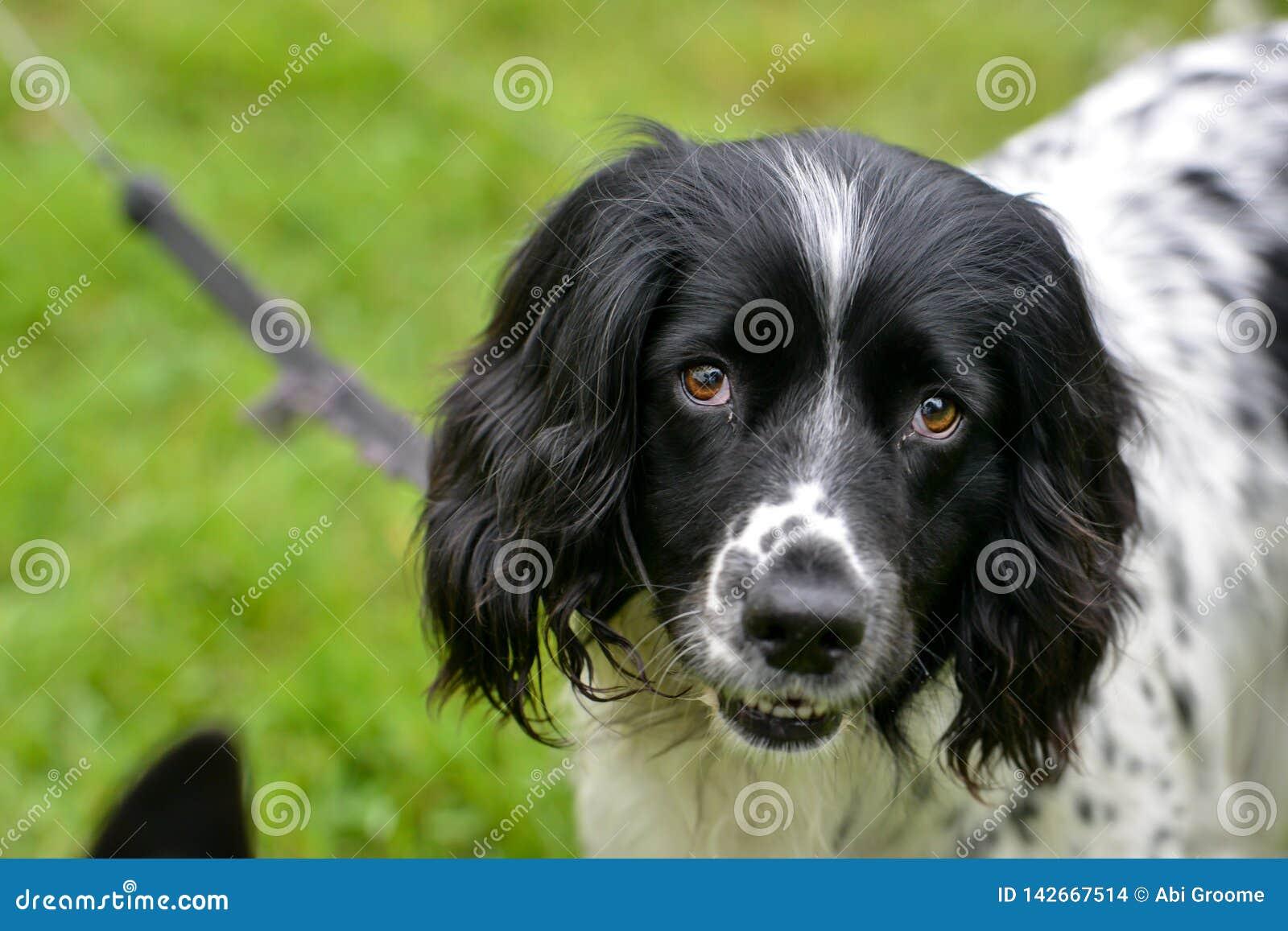 Gelukkig puppy die de camera bekijken terwijl op een lood
