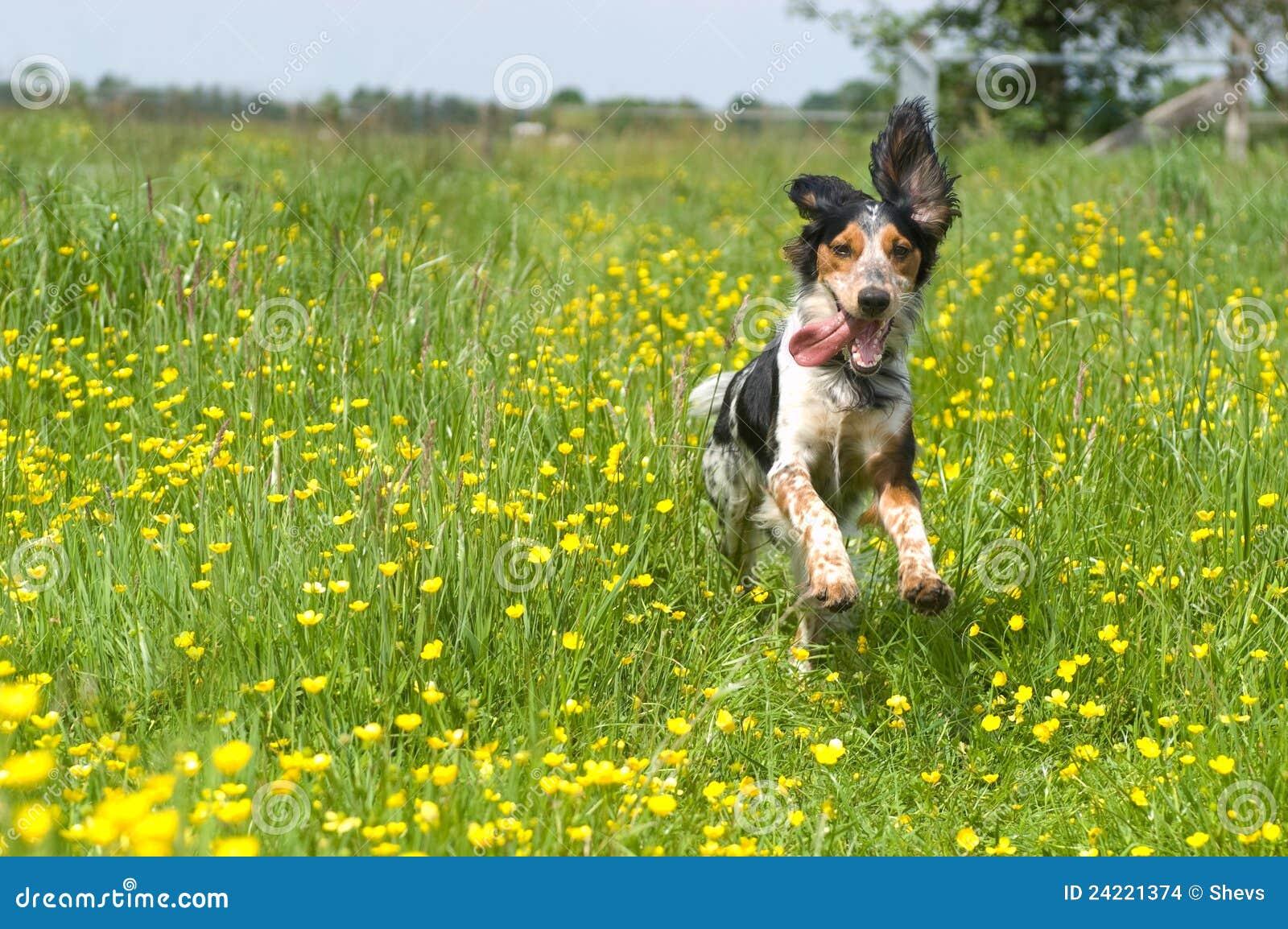 Gelukkige actieve hond