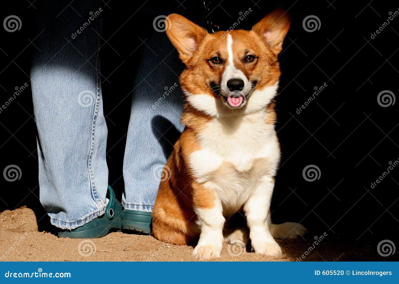 Gelukkige hond Corgi met zijn Meester.