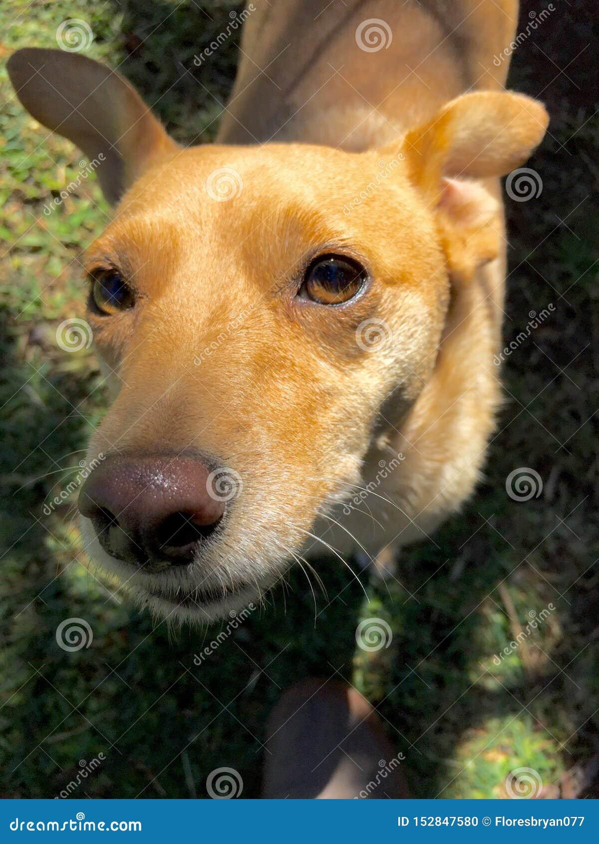 Gelukkige hond in Costa Rica