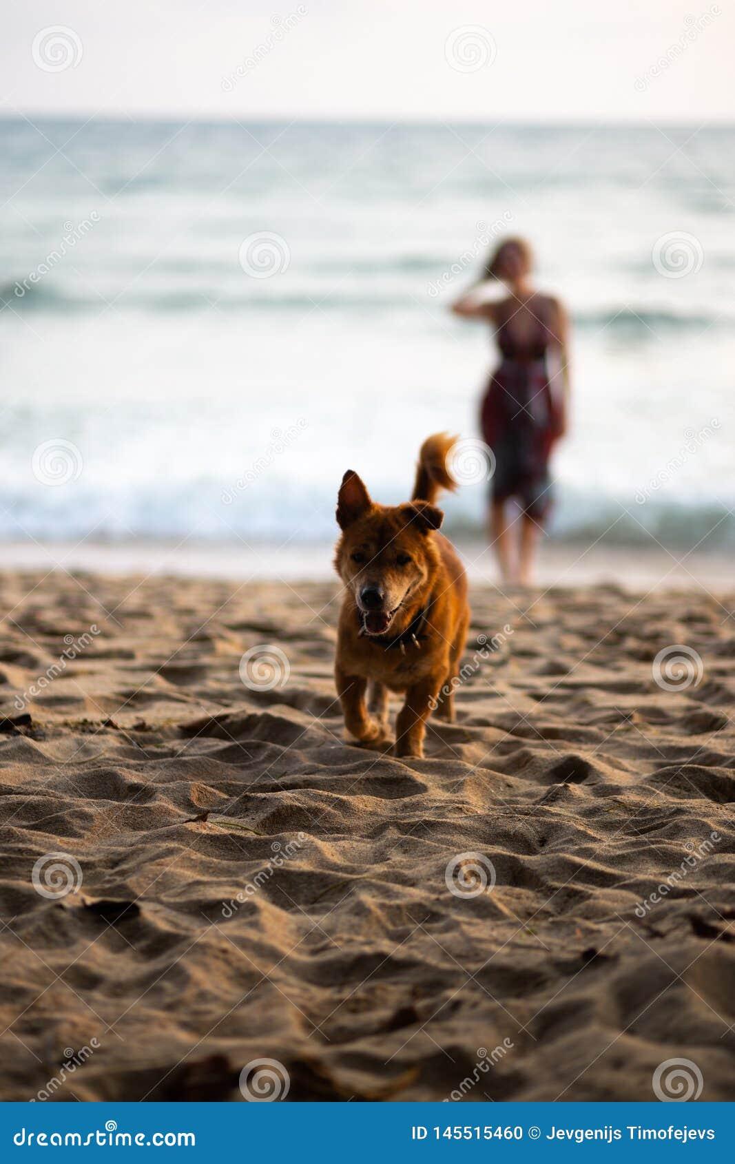 Gelukkige hond die naar eigenaar met een vrouw in een kleurrijke kleding op de achtergrond lopen