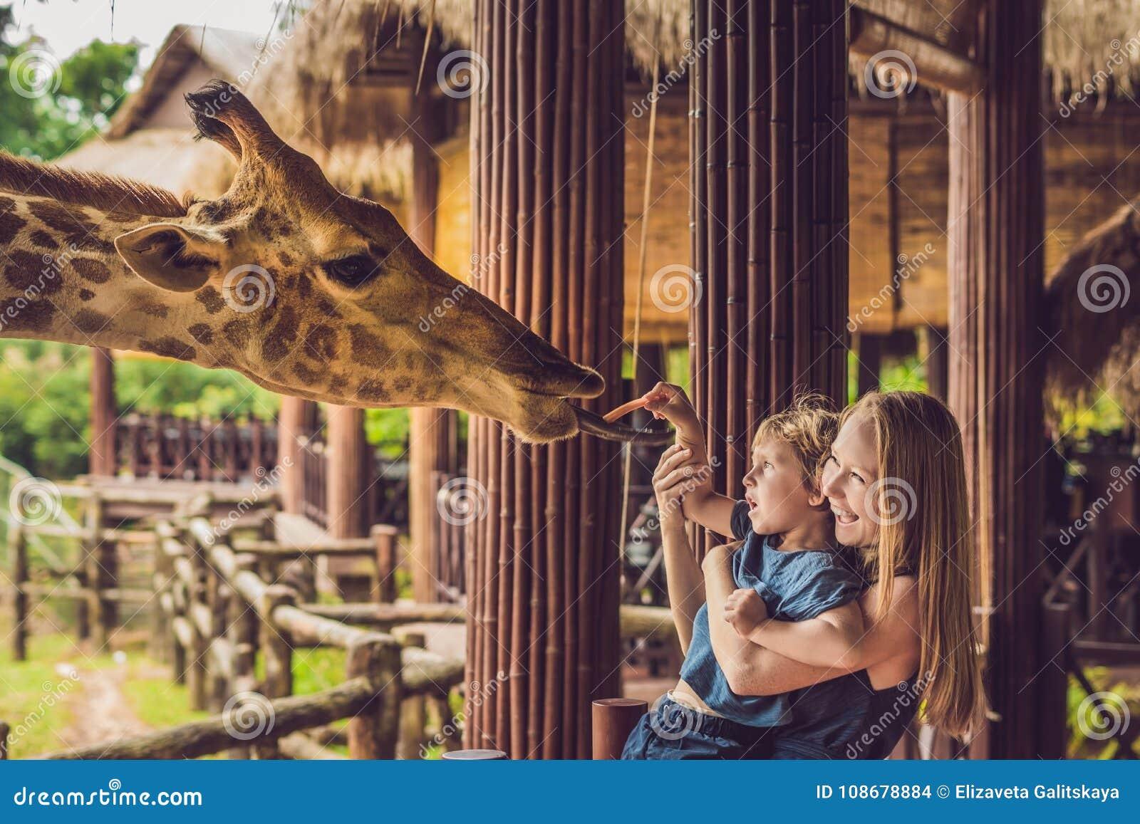 Gelukkige moeder en zoons lettende op en voedende giraf in dierentuin Gelukkige familie die pret met het park van de dierensafari