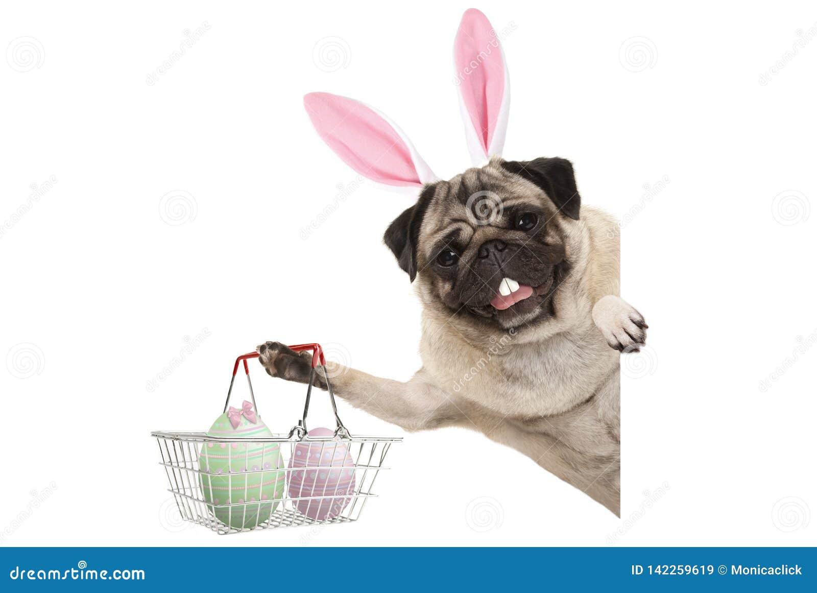 Gelukkige Paashaaspug hond met konijntjestanden en pastelkleurpaaseieren in draadmetaal het winkelen mand