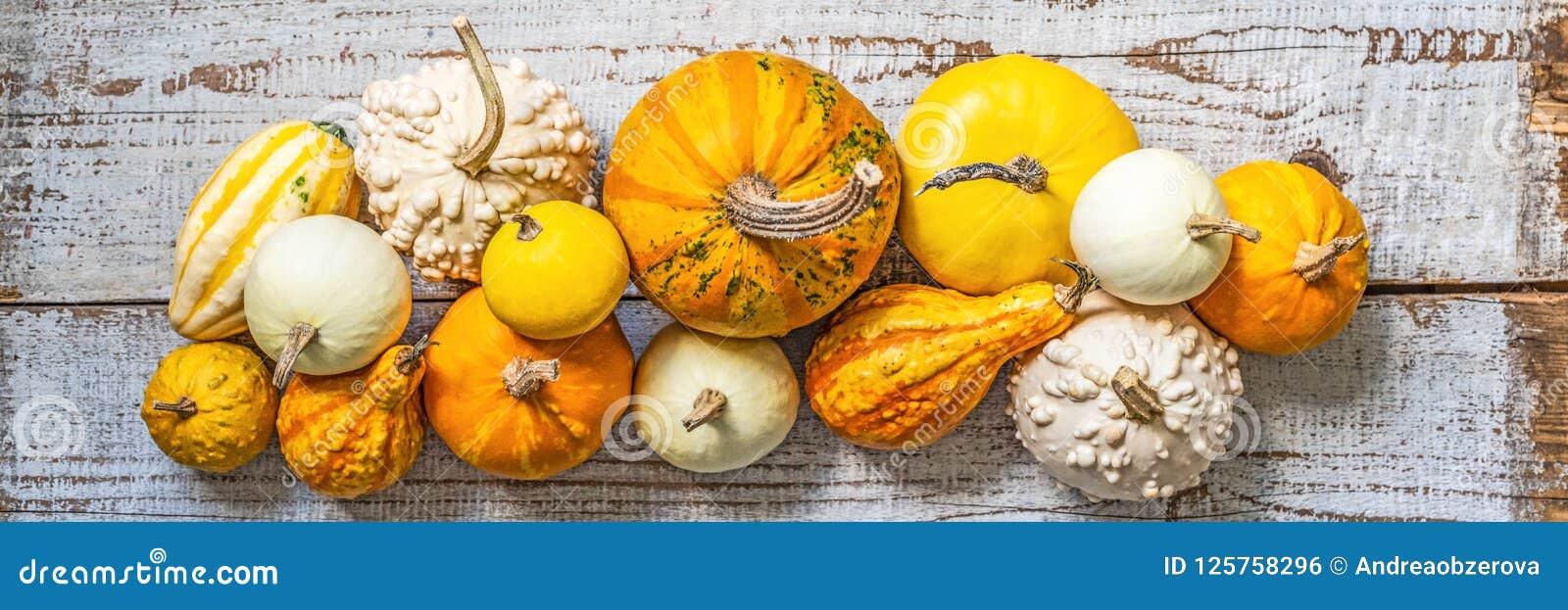 Gelukkige thanksging banner Selectie van diverse pompoenen op oude witte houten achtergrond De herfstgroenten en seizoengebonden