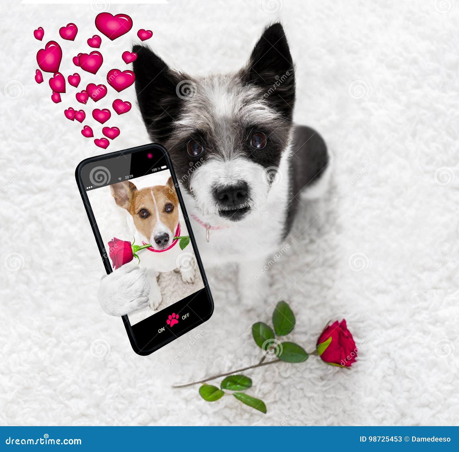 Gelukkige valentijnskaartenhond selfie