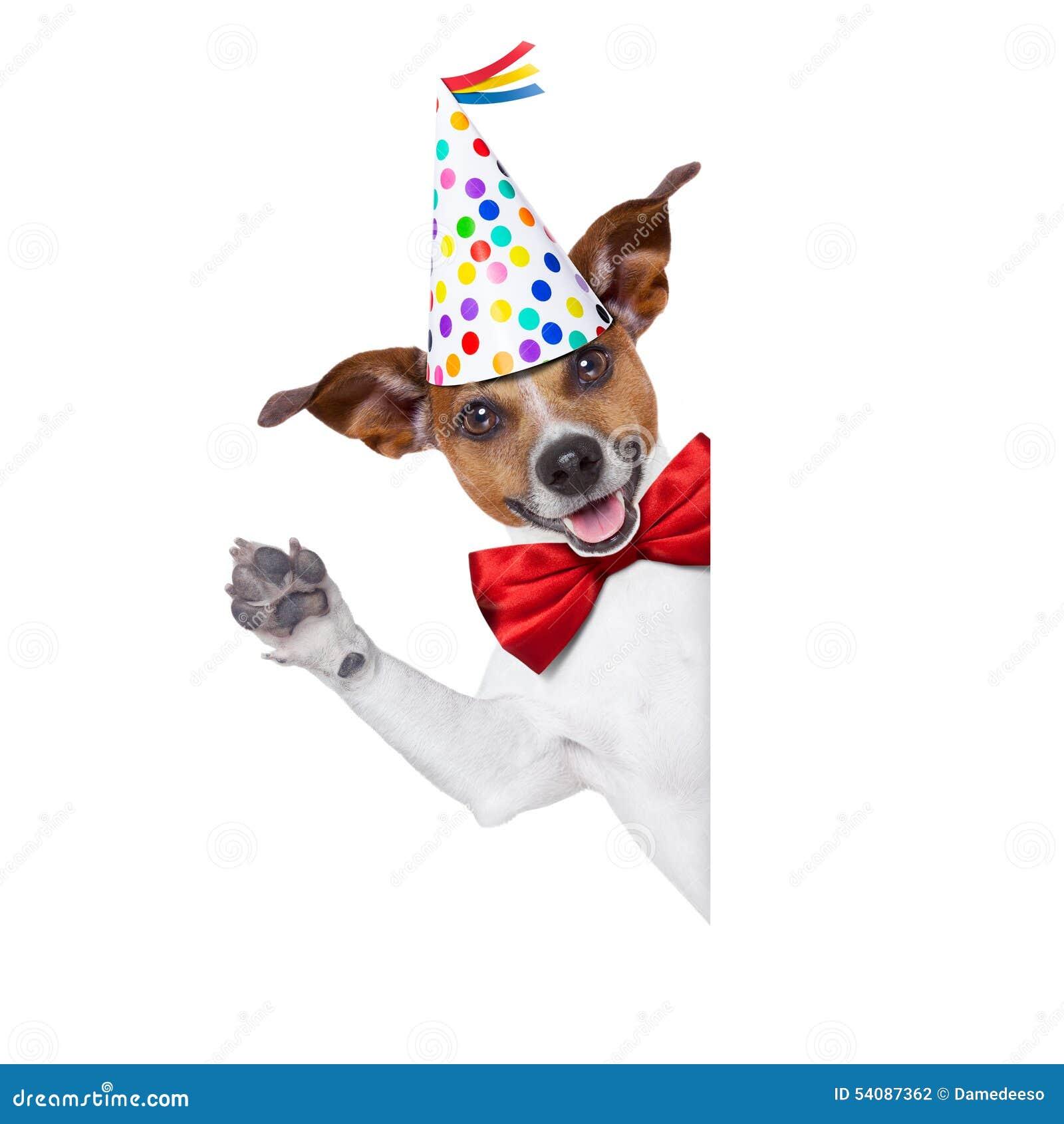 Gelukkige verjaardagshond