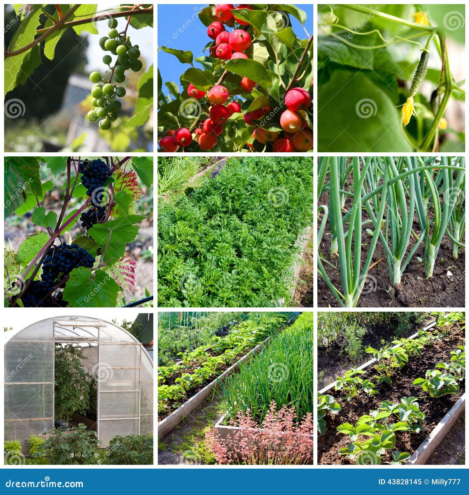 Gemuse Gewachshaus Und Frucht Arbeiten In Russland Im Garten