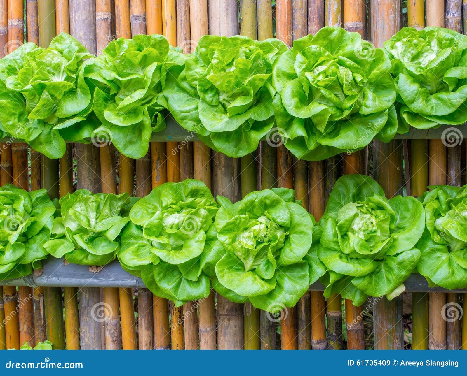 Gemüse In Verzierter Vertikaler Idee Garten Der Wand Stockbild