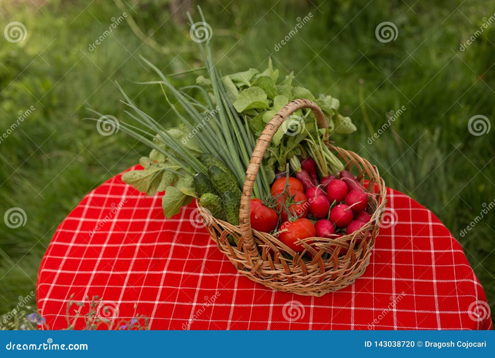 Gemüse vom Garten Frisches Biogemüse in einem Korb Über Natur-Hintergrund
