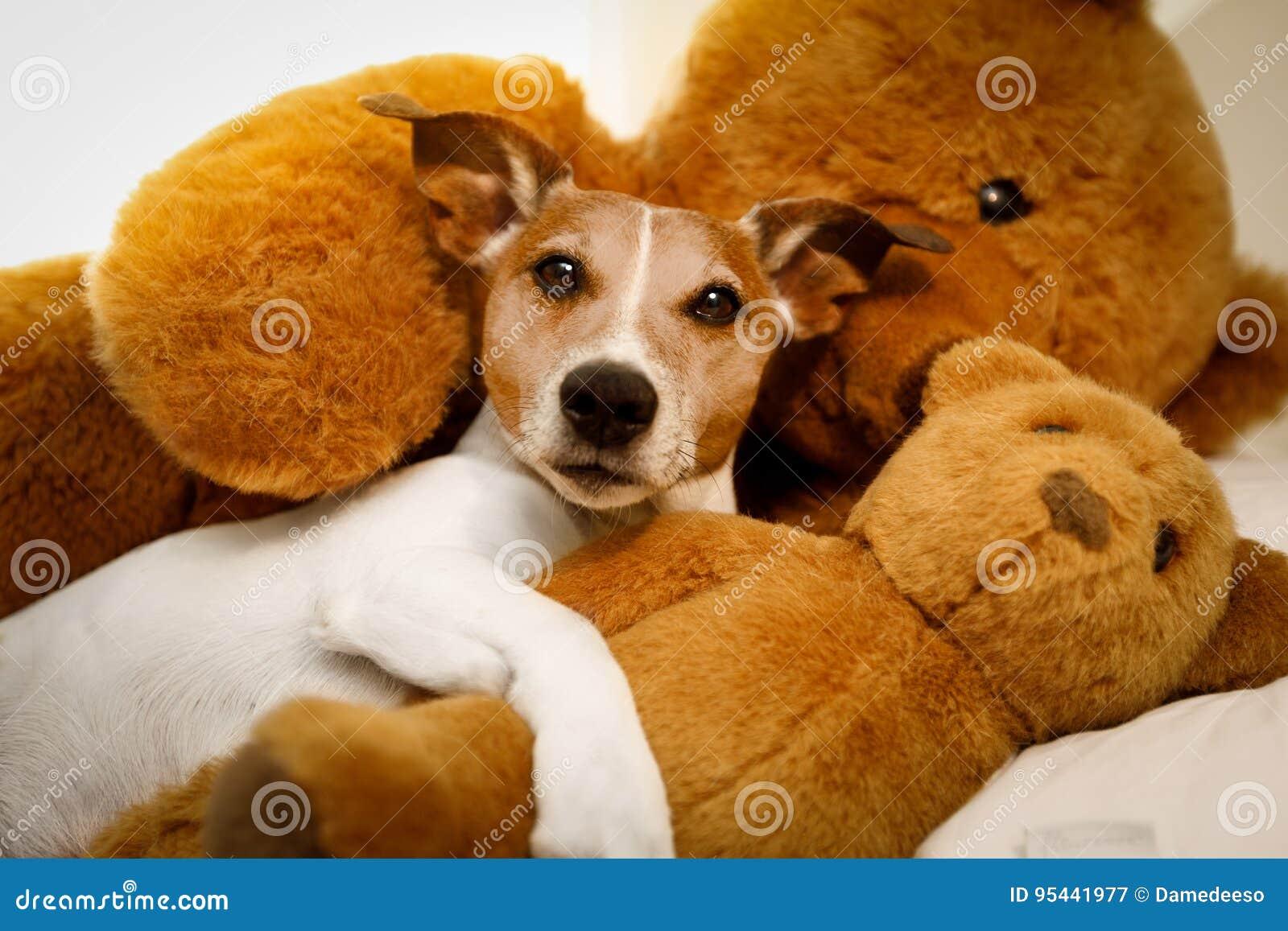 Gemütlicher Hund Im Bett Mit Teddybären Stockbild - Bild von ...