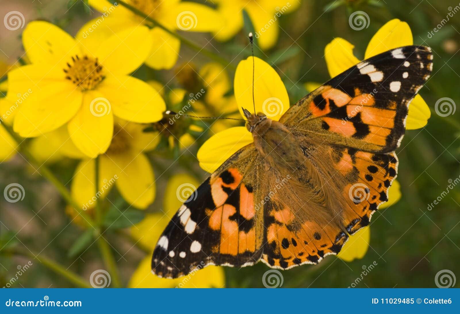 gemalte dame auf gelben blumen am sommer stockbild bild von sonne basisrecheneinheiten 11029485. Black Bedroom Furniture Sets. Home Design Ideas