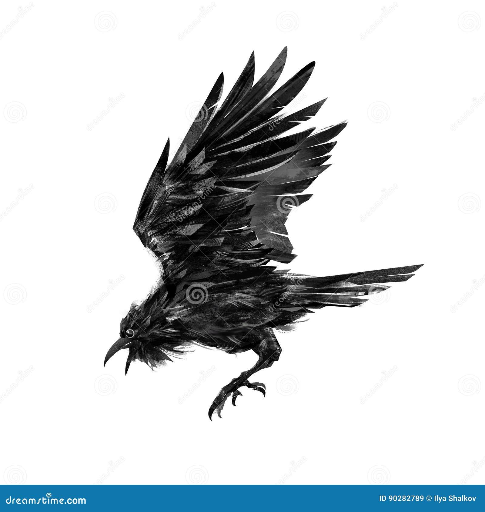 Gemalter Fliegenrabenvogel auf weißem Hintergrund