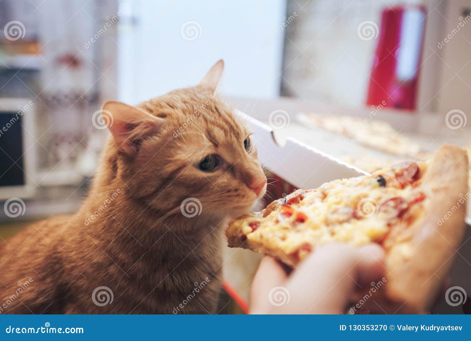 Gember en Pizza