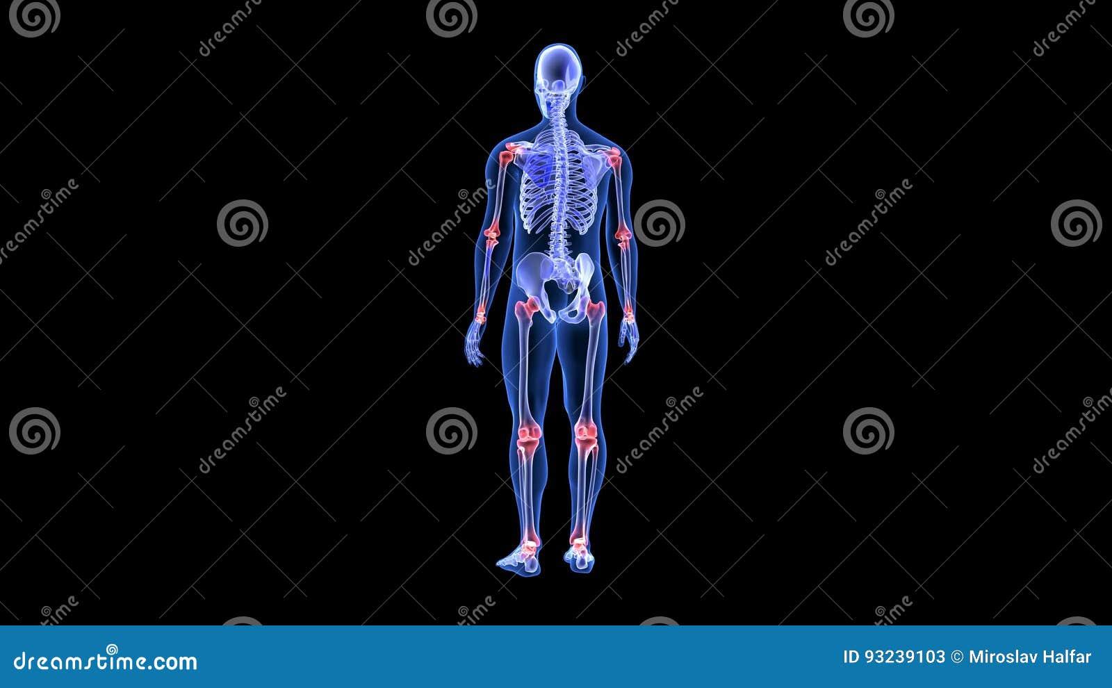 Gemeinsame Schmerz Blauer Menschlicher Scan Des Anatomie-Körper-3D ...