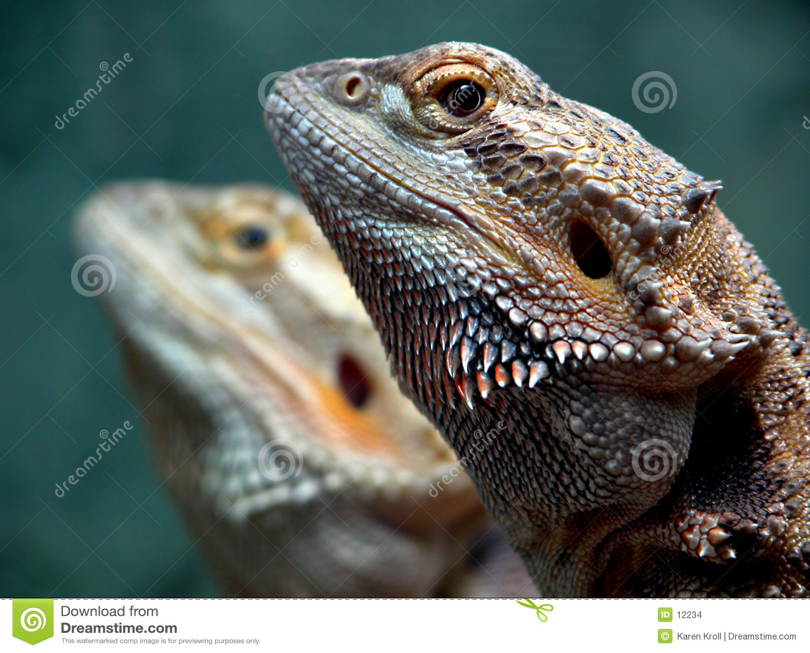 Gemelos del dragón