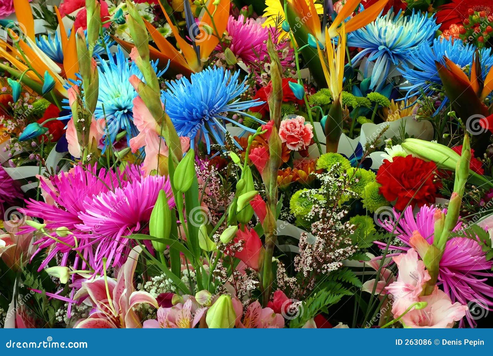 Gemengde Multicolored Bloemen
