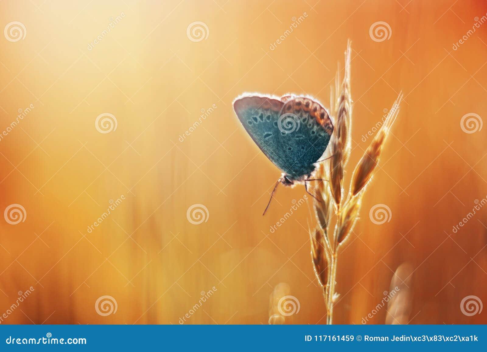 Gemensamma blått i orange gras
