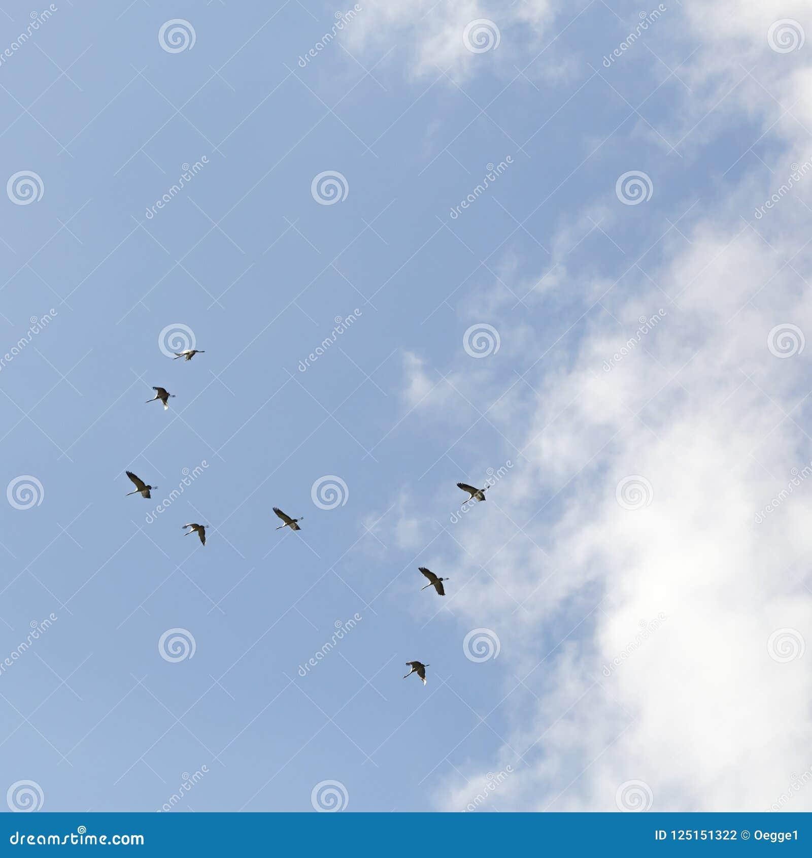 Gemensamma kranar i himlen