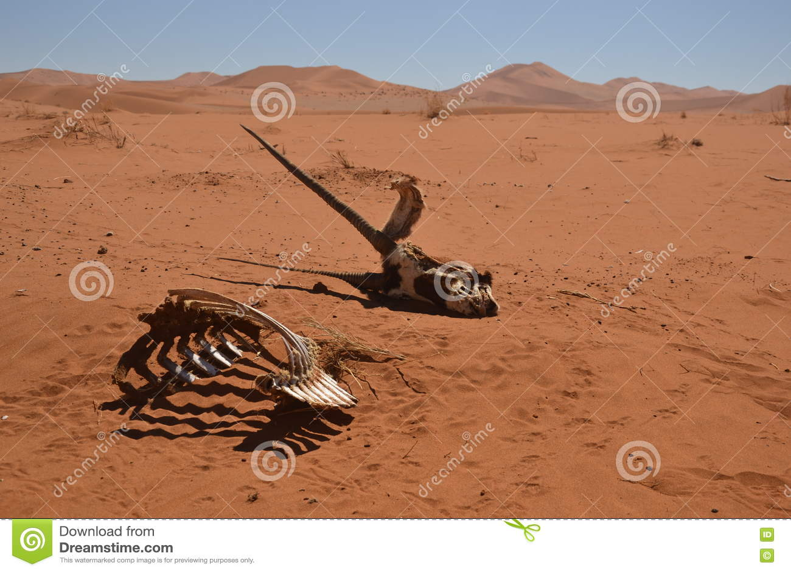 Gemsbokskelet in Namib-woestijn