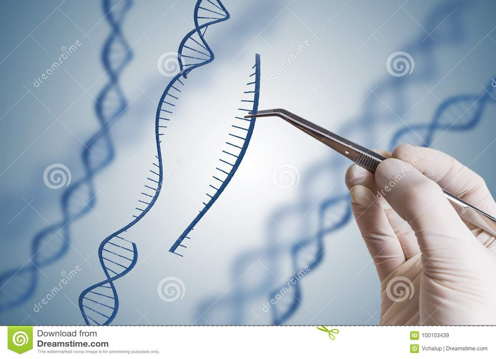 Genética, GMO e conceito da manipulação do gene A mão está introduzindo a sequência do ADN