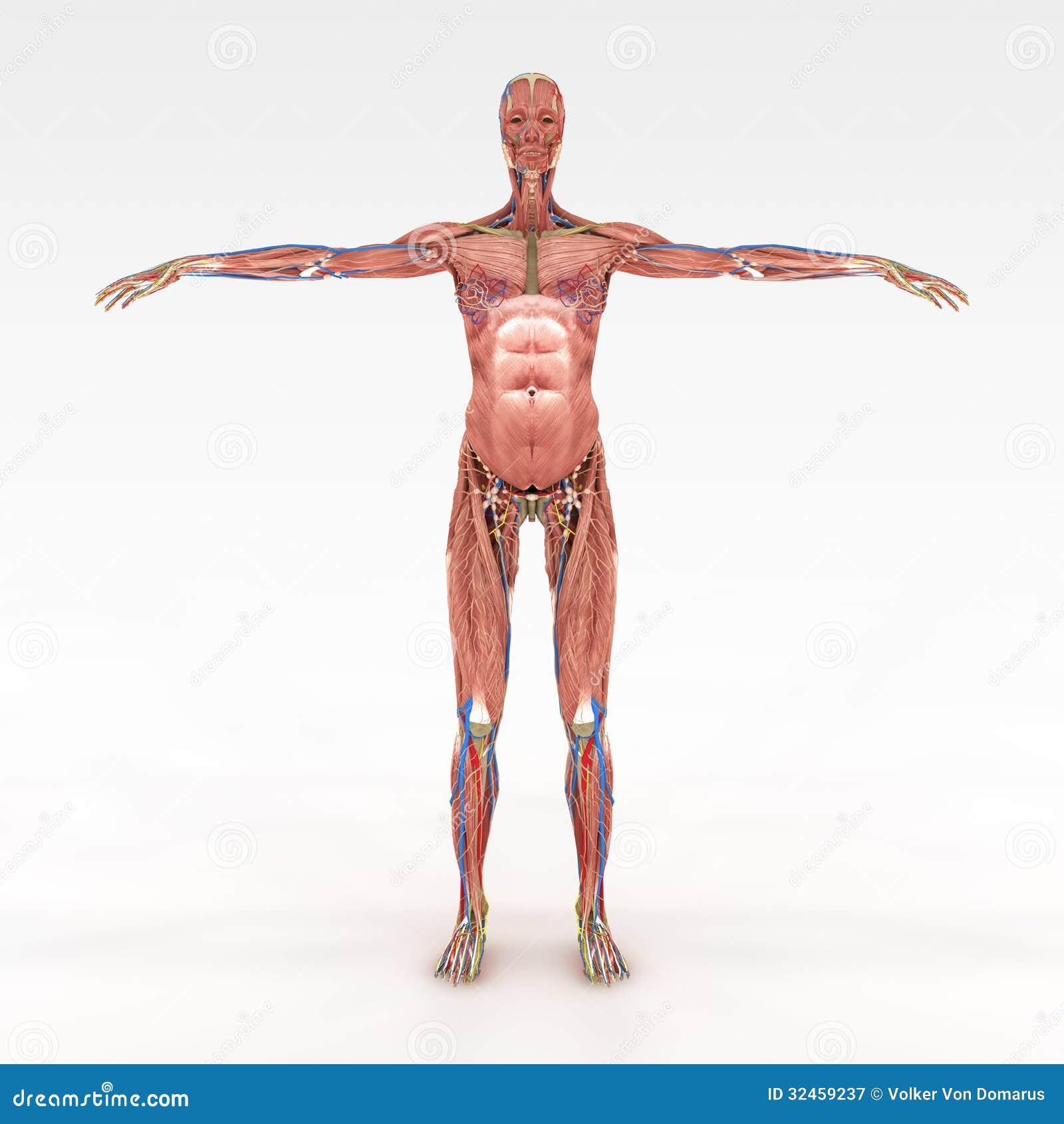 Berühmt Weibliche Reproduktion Anatomie Galerie - Anatomie Ideen ...