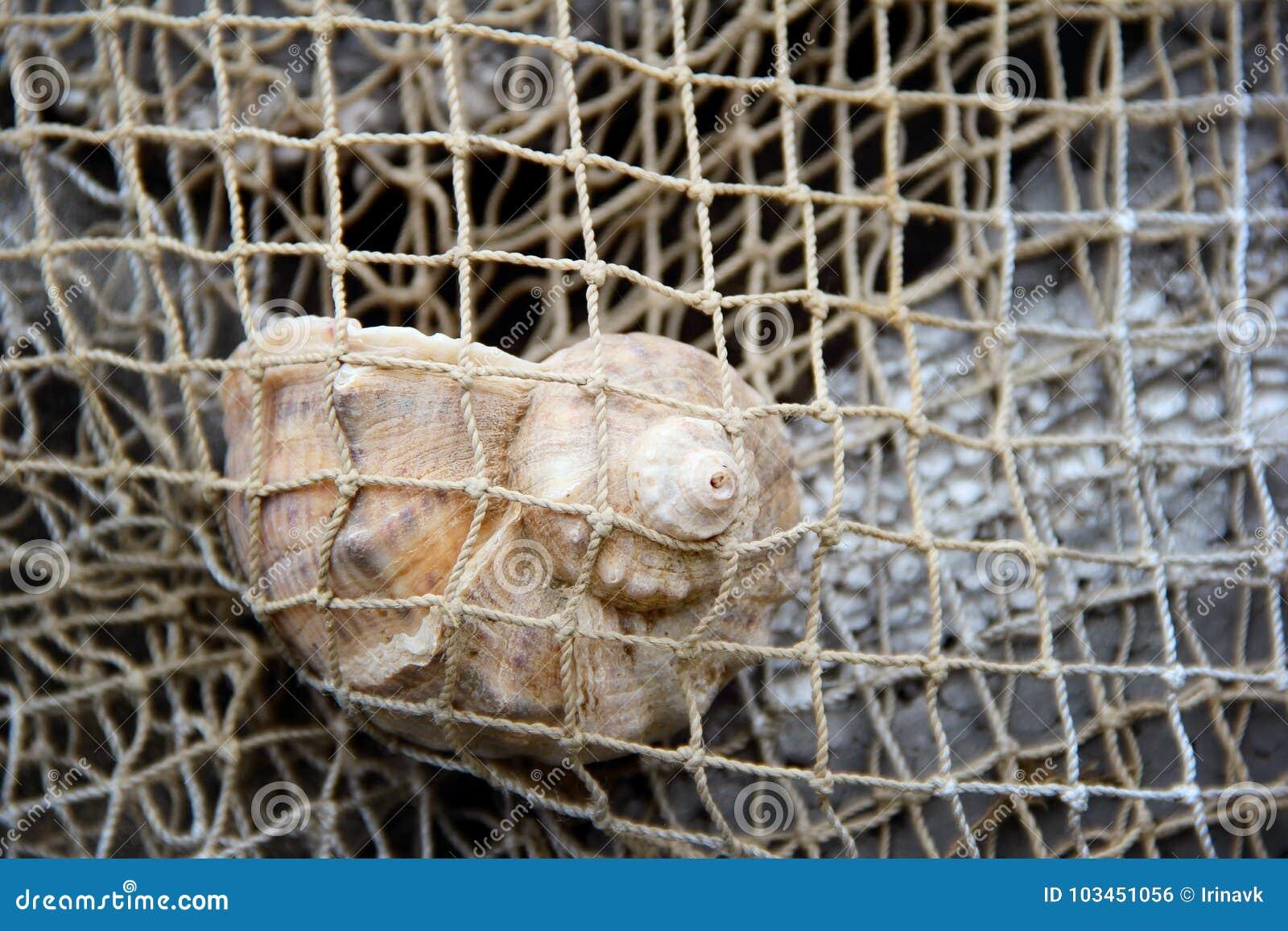 Gener-Oberteil in einem Fischernetz foto