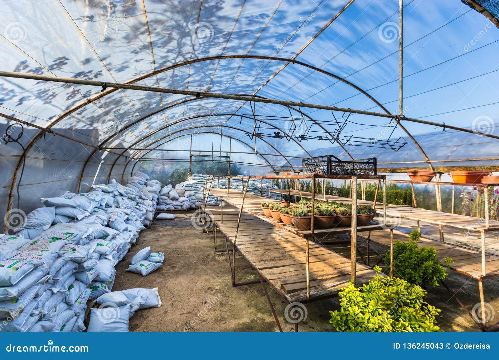 Genere differente di fiori e di piante in vasi, nei sacchetti di plastica o in petti