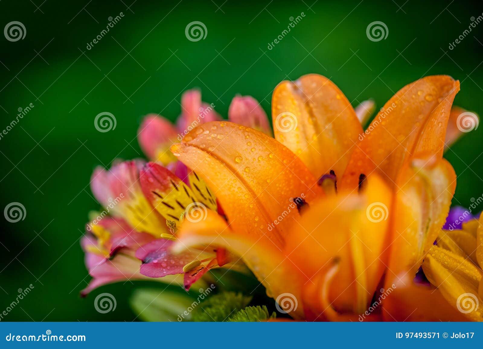 Generi differenti di fiori freschi