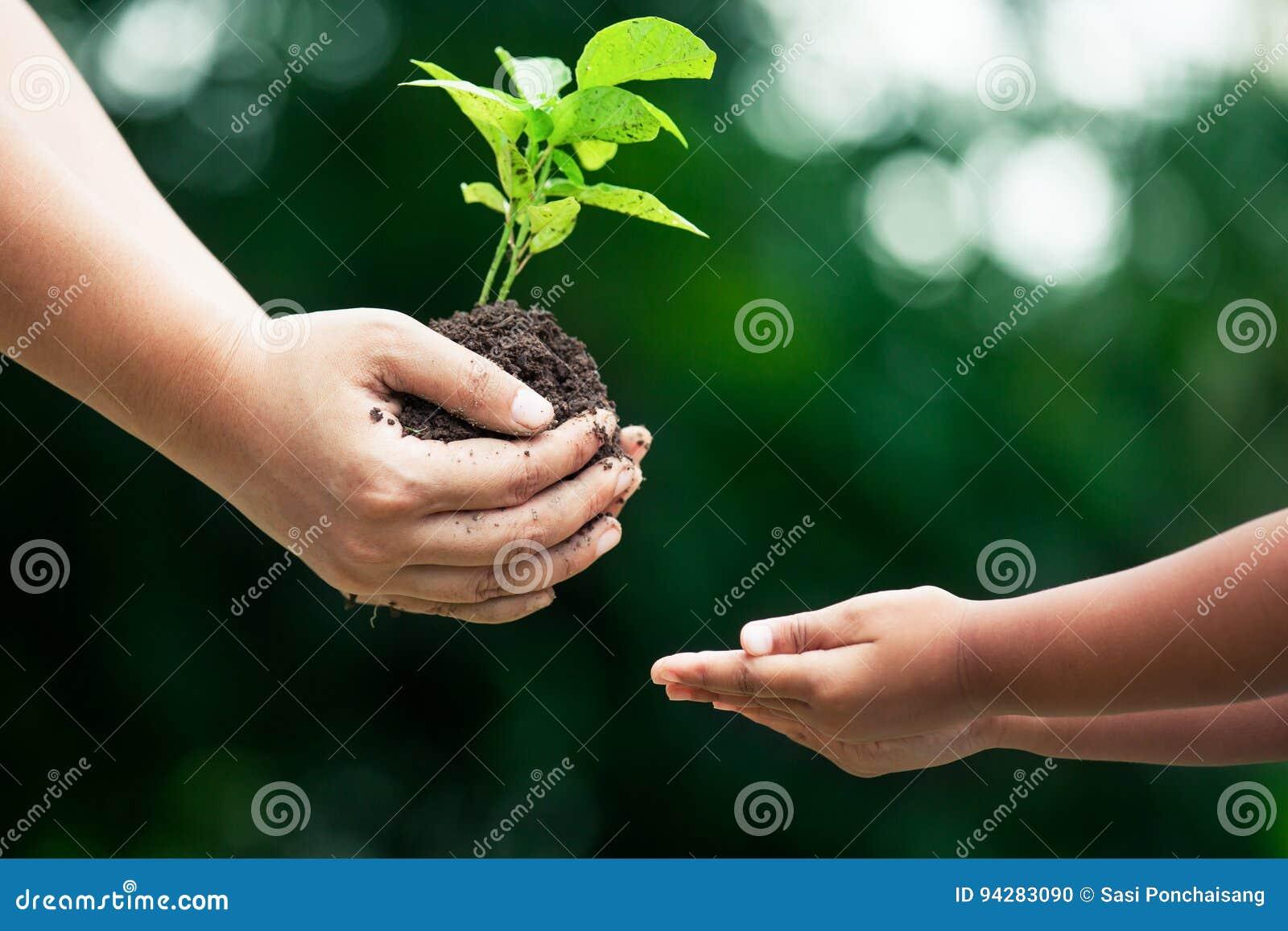 Generi la mano del ` s che dà il giovane albero ad un bambino per la piantatura insieme