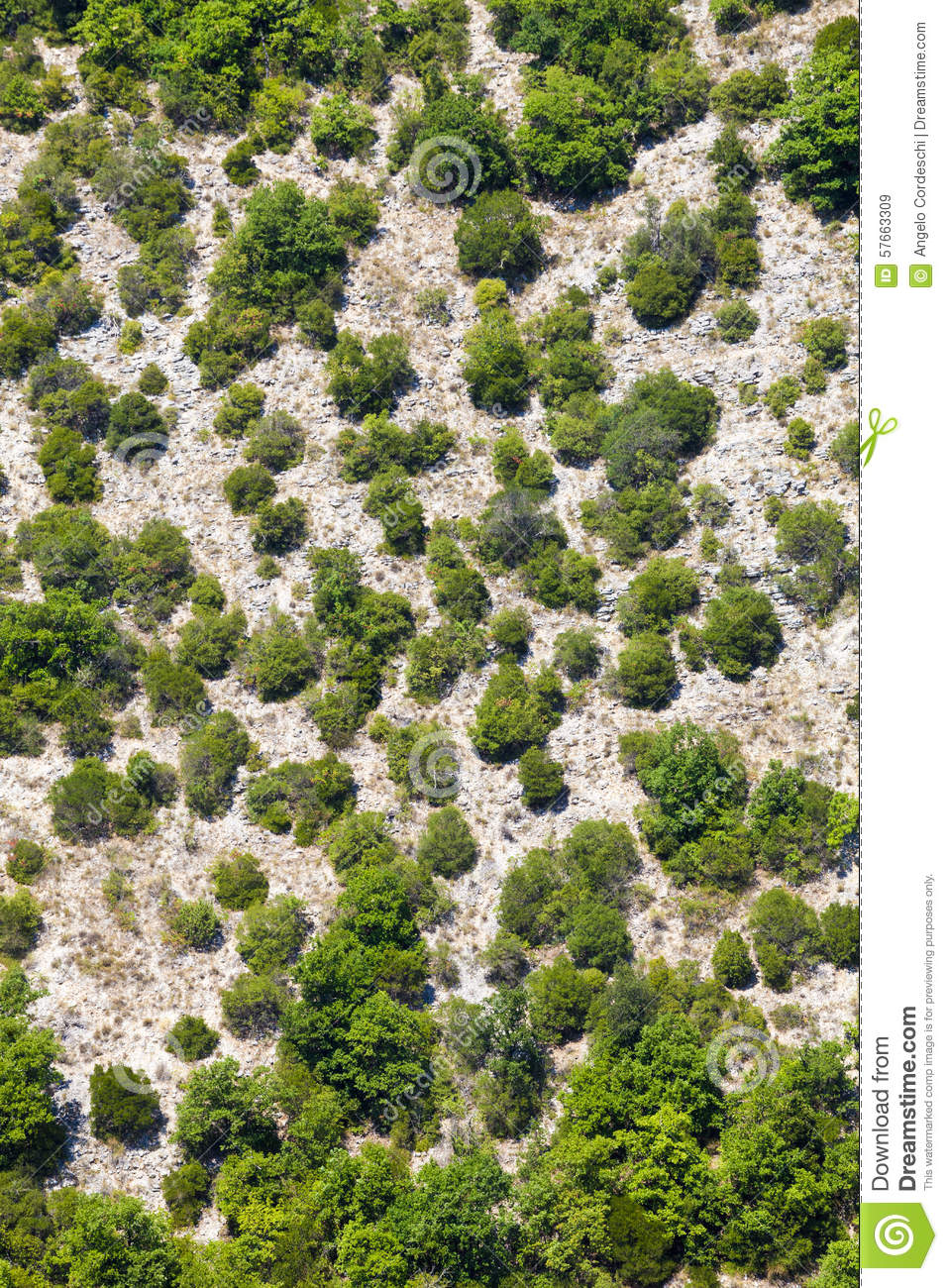 Generic Mountain Vegetation Aerial View Trees And