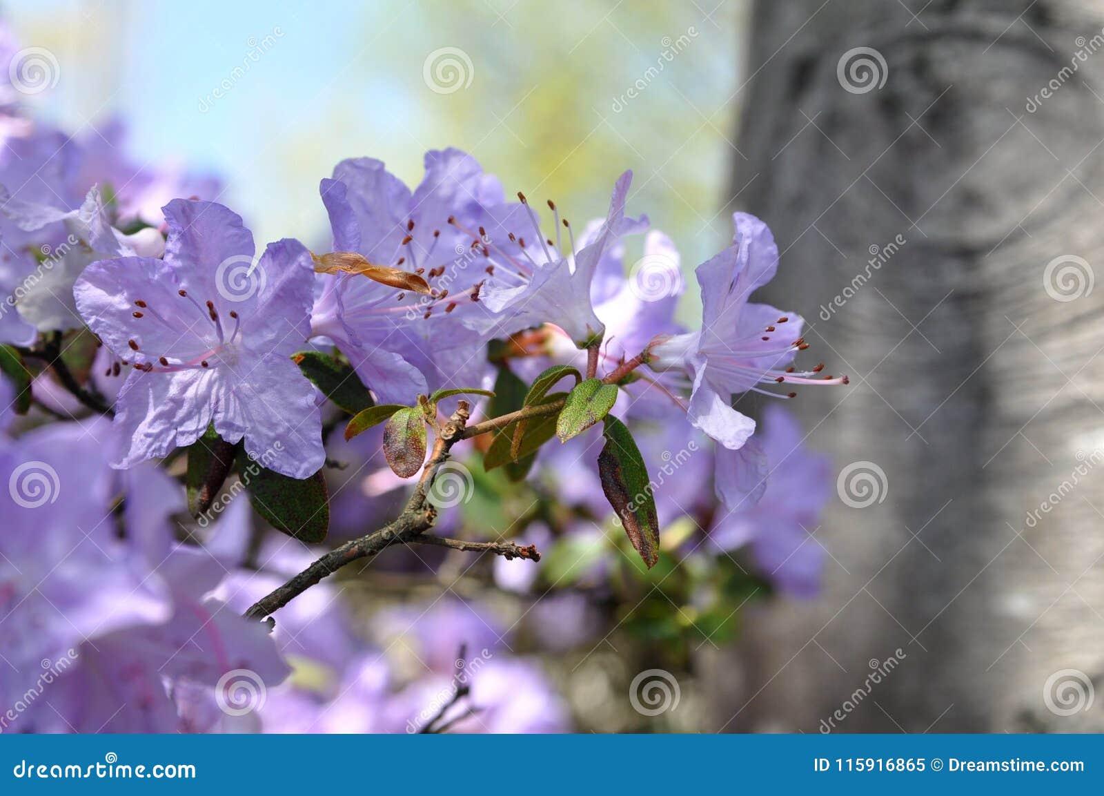 Generic Purple Flower Background Stock Image Image Of Springfield