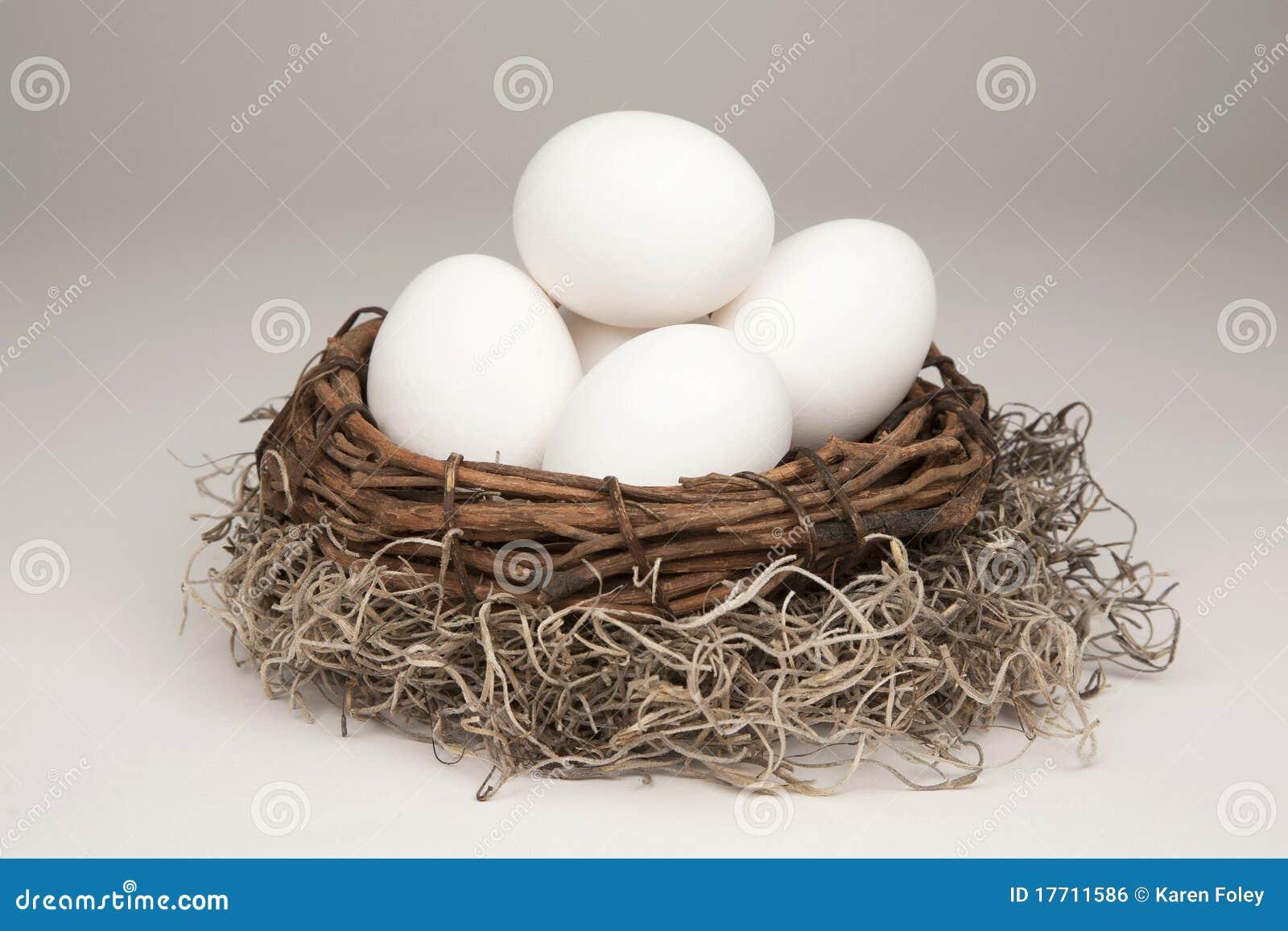 Generische het Ei van het nest
