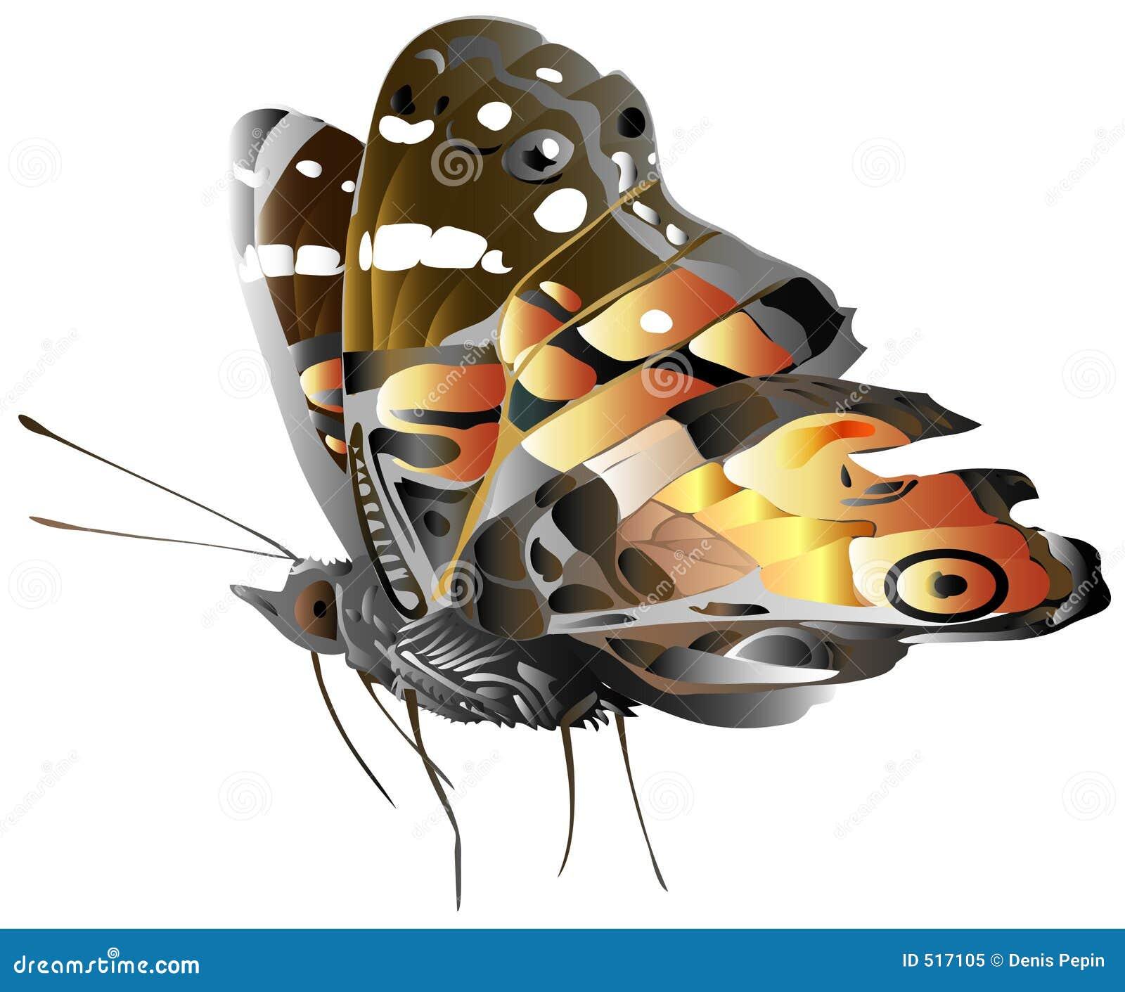 Generisk illustration för fjäril