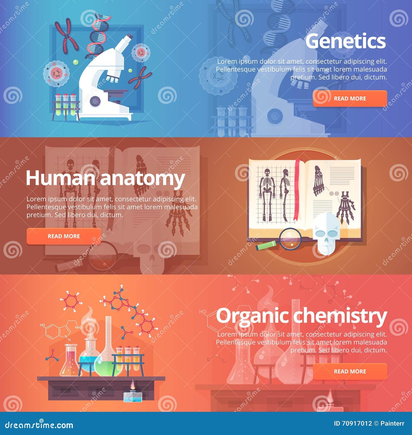 Genetics. Human Genome. Human Anatomy. Stock Vector - Illustration ...