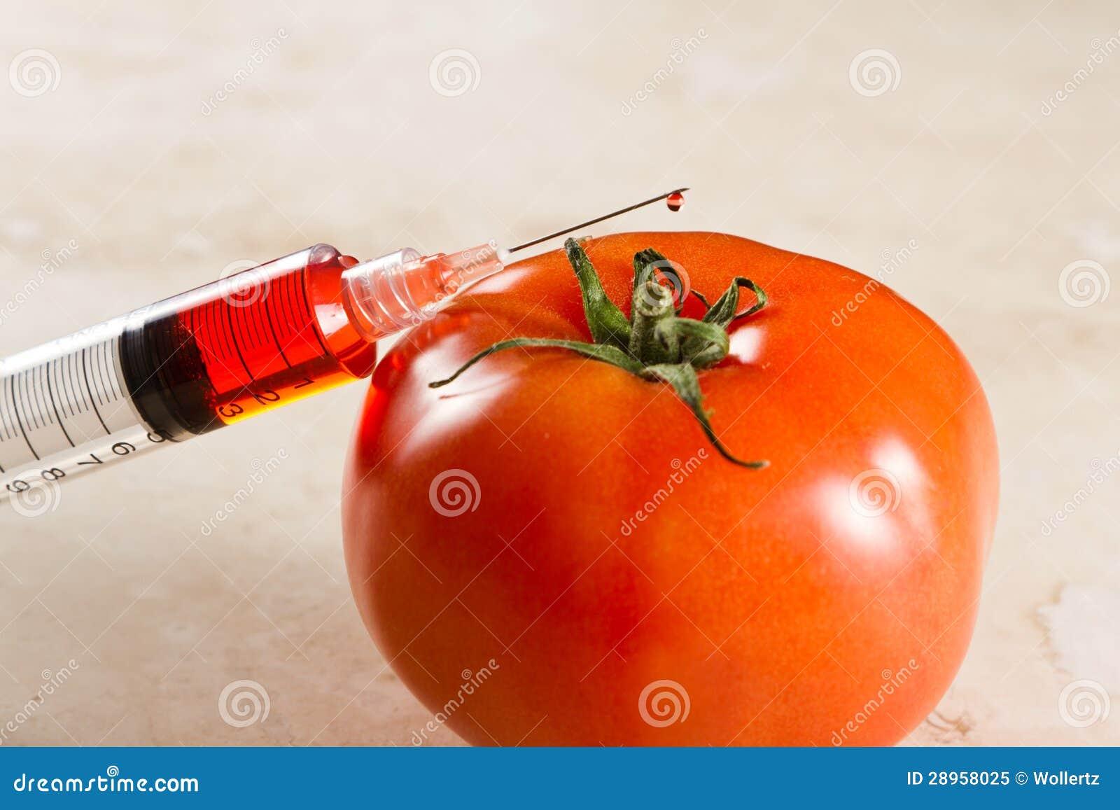 Genetycznie zmodyfikowany pomidor, gmo