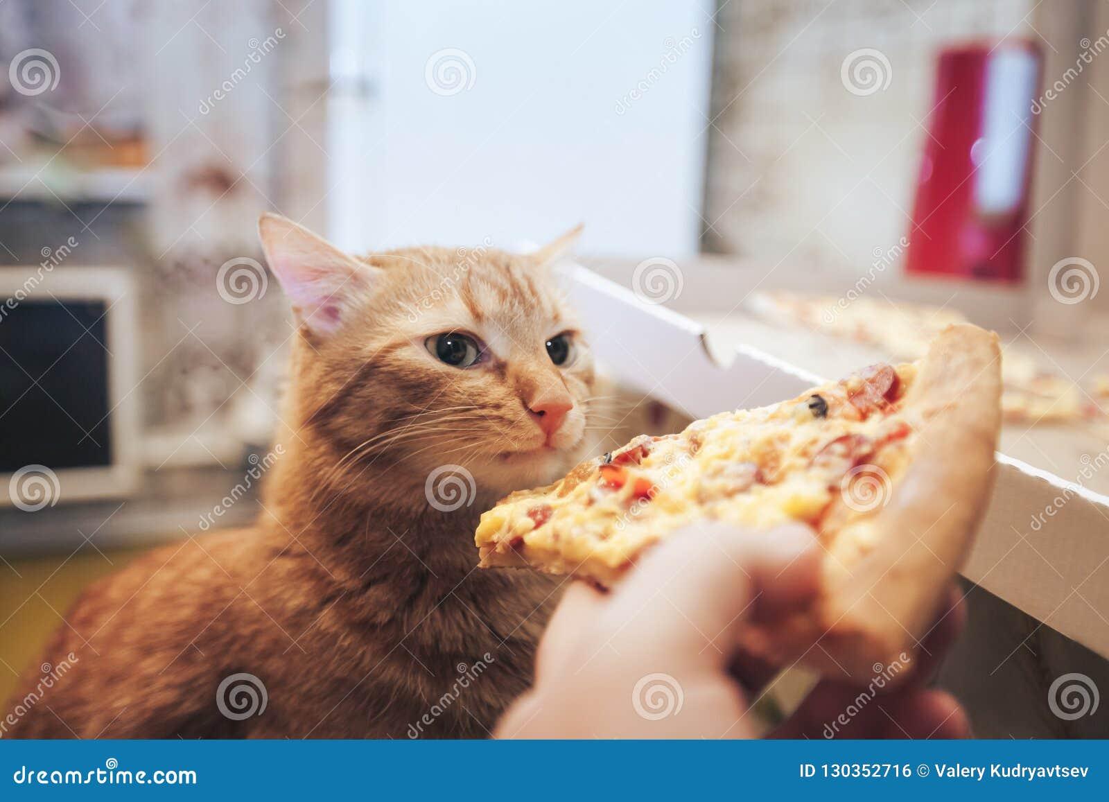 Gengibre e pizza