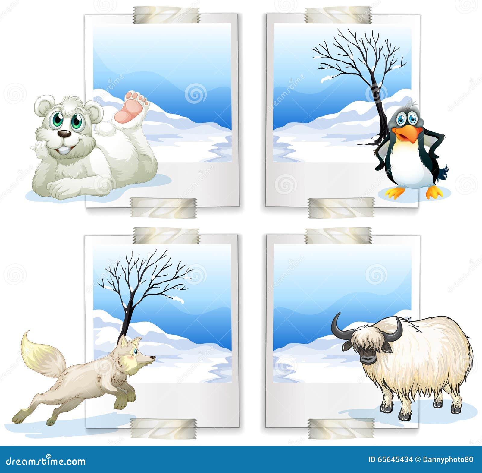 Genre quatre d animaux arctiques