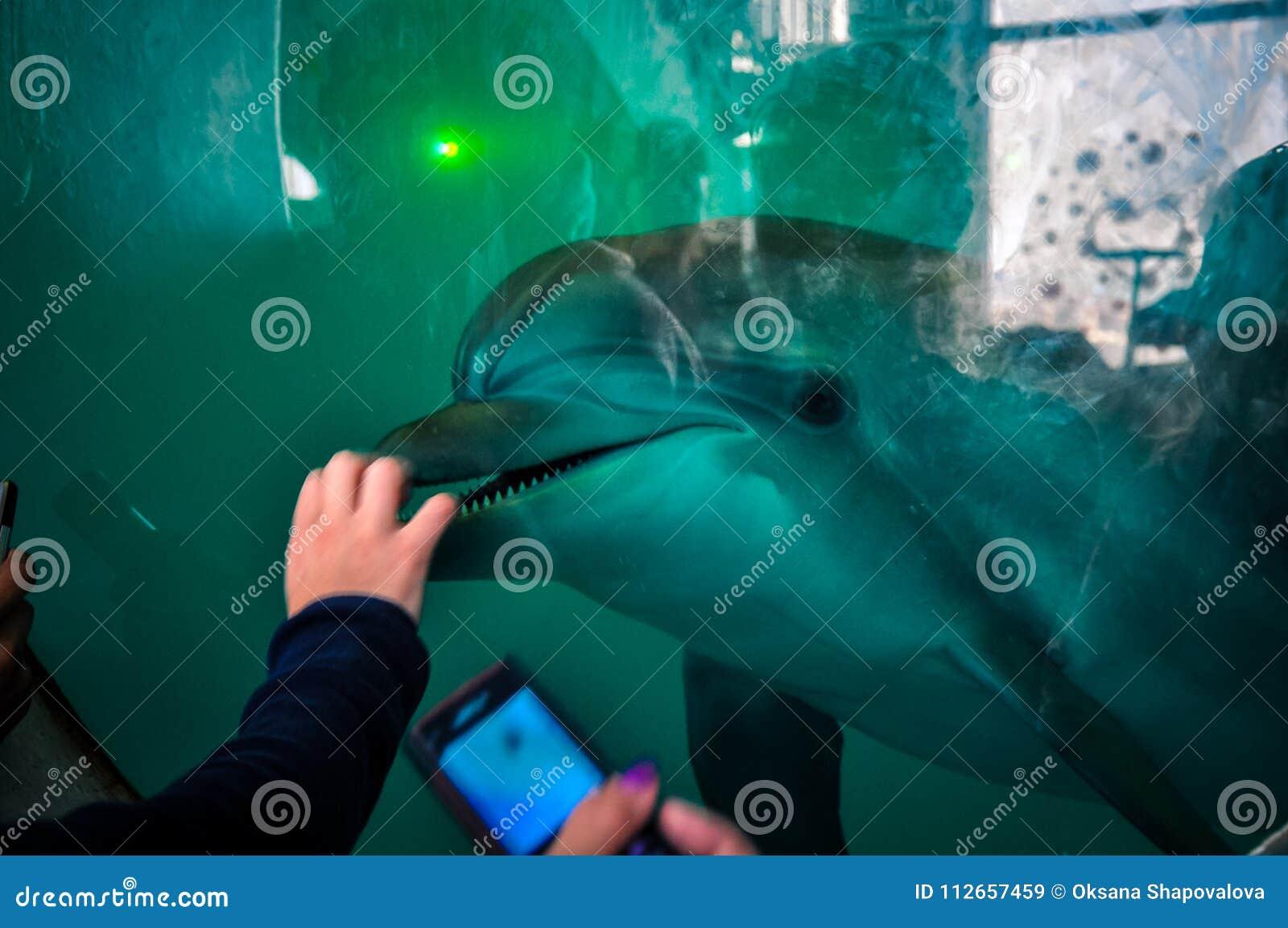 Gente y delfín de la reunión de Dolphinarium