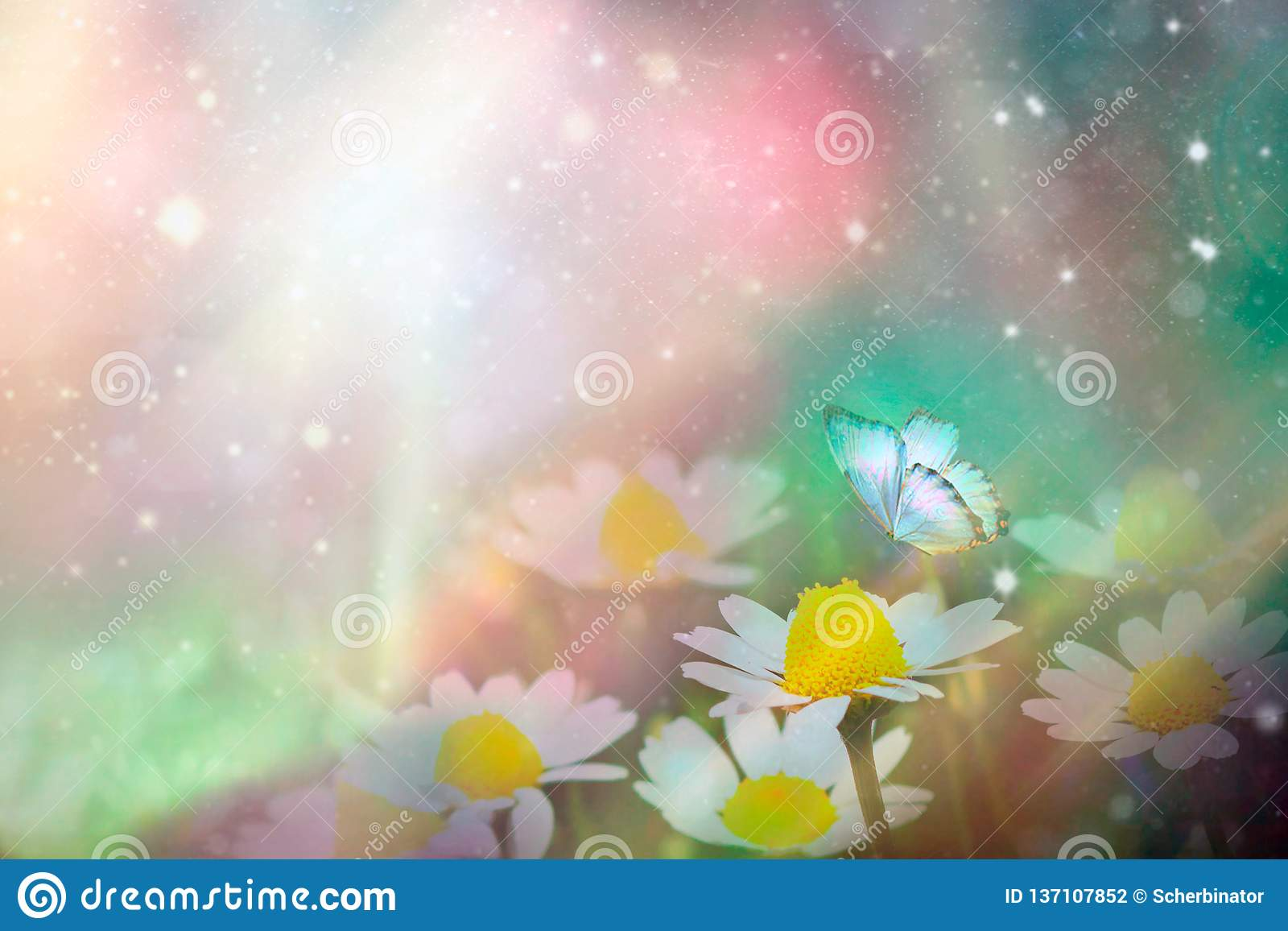 A gentle blue butterfly on a daisies flower in nature in soft pastel colors with a soft focus, macro. Dreamy, romantic, elegant,