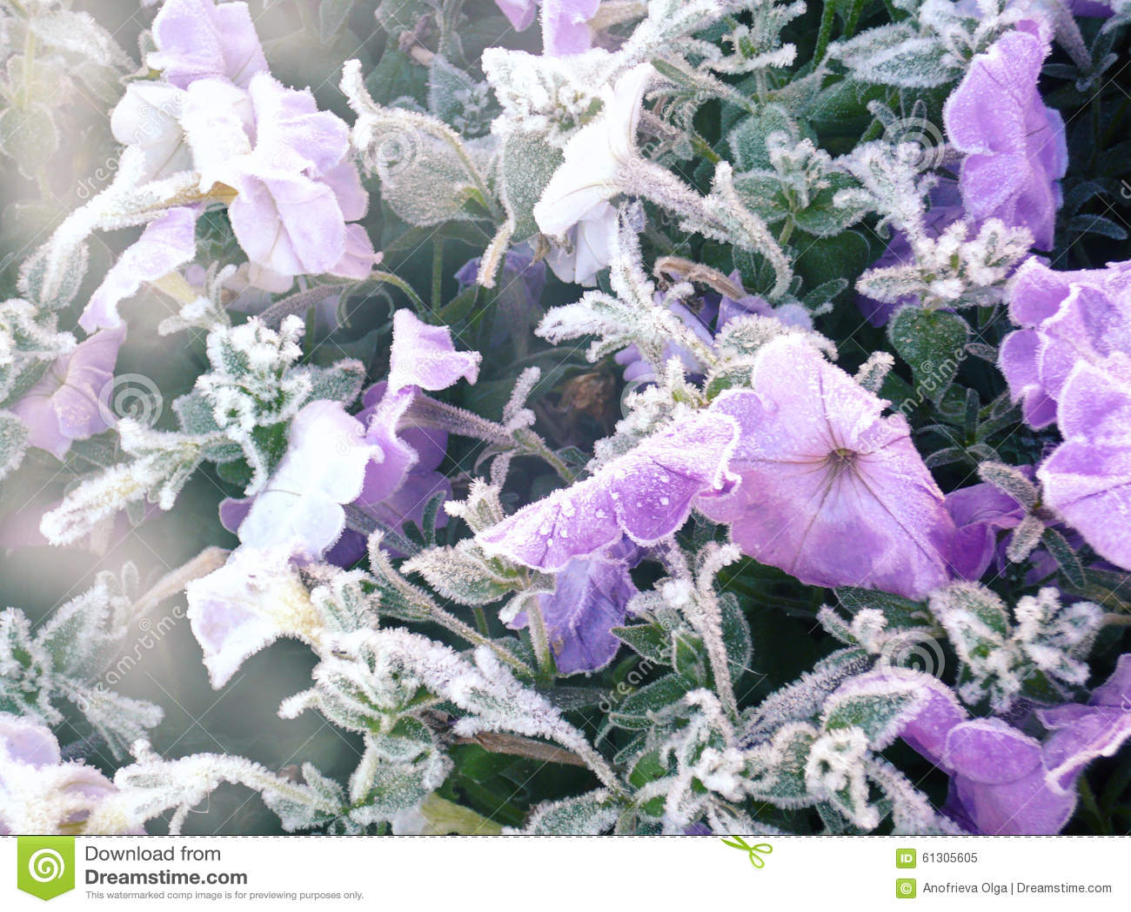 Gentle frozen flowers