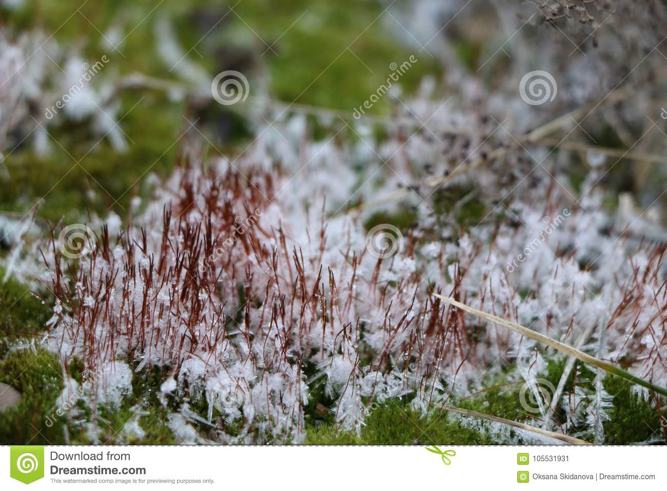 Gentle green fluffy moss with white snowflakes covers concrete slabs