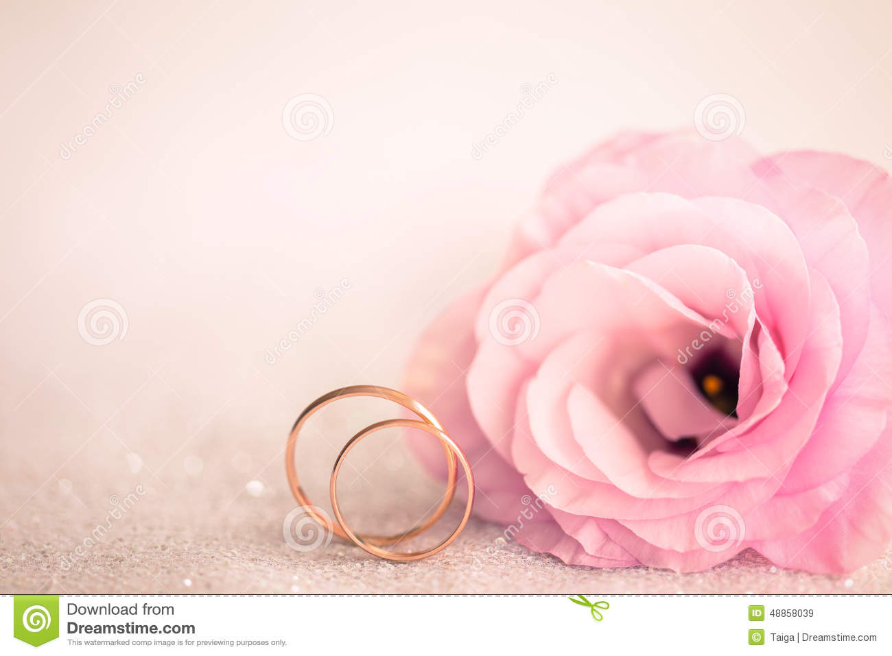 Gentle Pink Wedding Background With Rings And Flower Stock Image ...
