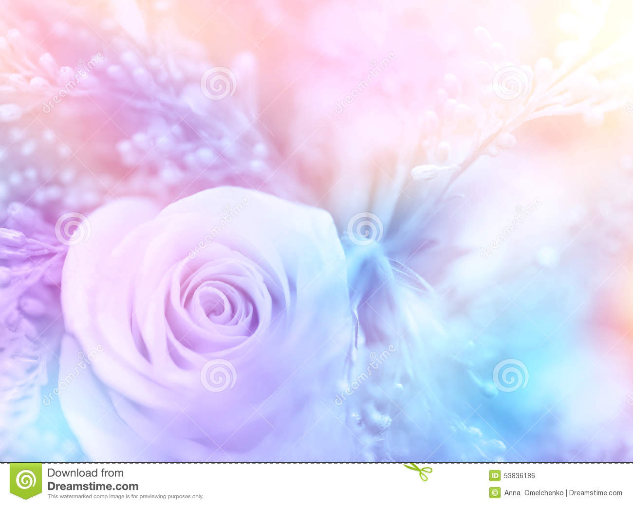 Gentle Rose Background Stock Photo Image Of Beauty