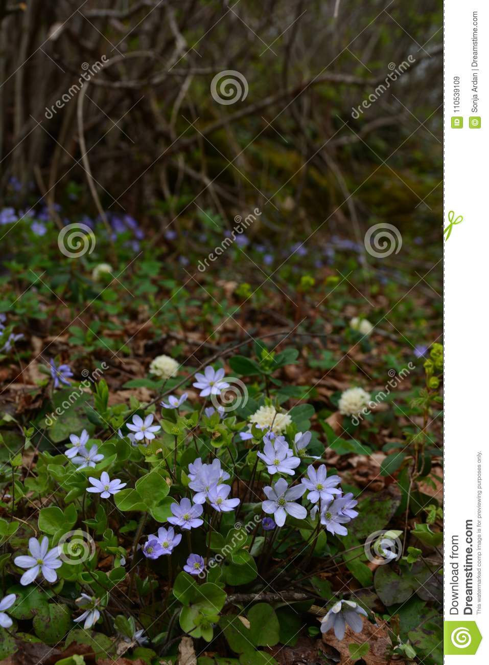 Gently Blue Flowers In The Shade Of Shrubs Stock Image Image Of