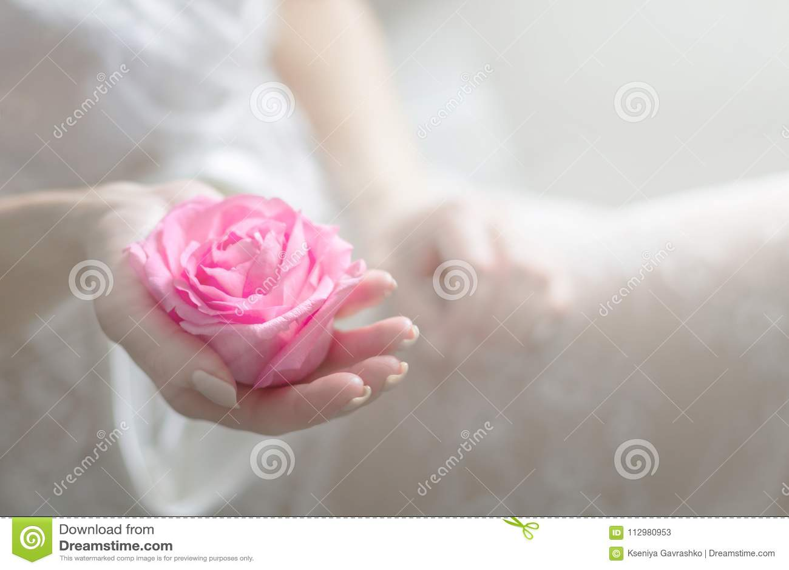 Innocent Flower in Gentle Feminine Hands. Copy Space