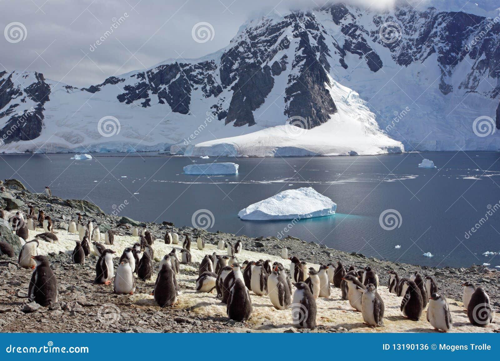 Gentoo αποικιών της Ανταρκτική&sigm