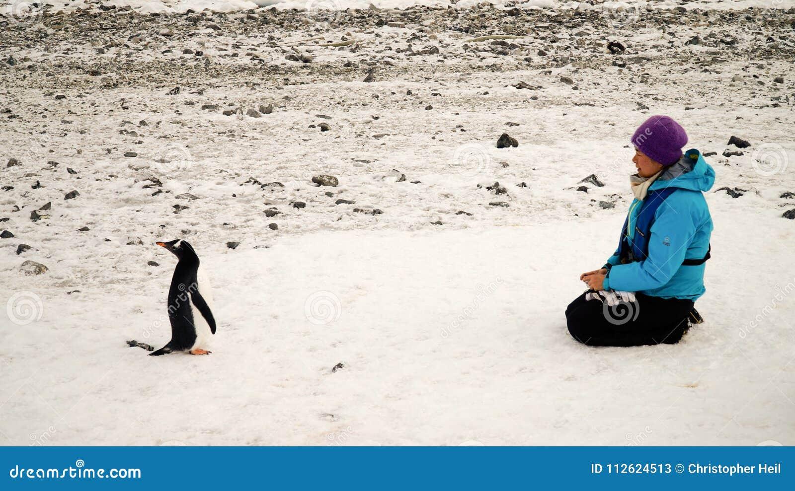 Gentoopinguïnen die mensen in Antarctica op Cuverville-Eiland ontmoeten