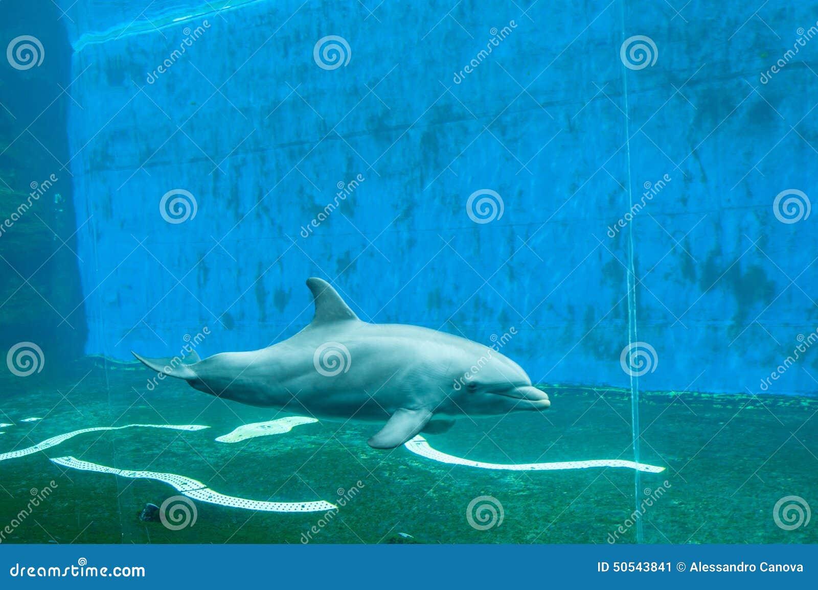 Genua, Aquarium, Delphinbehälter
